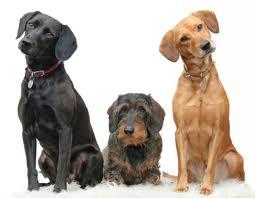 tri psi